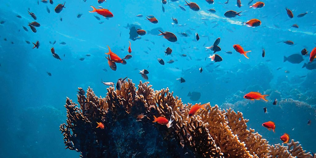 Pescanova Blue: novità per il futuro degli oceani